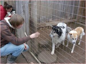 Животных из киевского частного приюта переселят в коммунальный