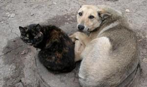 31 марта состоится международный марш против убийств бездомных животных