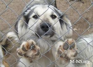 В Днепропетровске построят приюты для бездомных собак