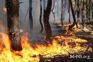 В Крыму горит заповедник