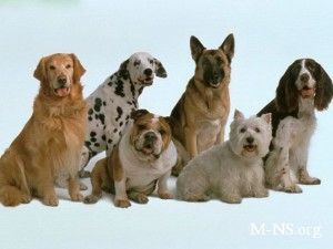 Жители Луцка теперь будут платить за своих собак как за комуслуги