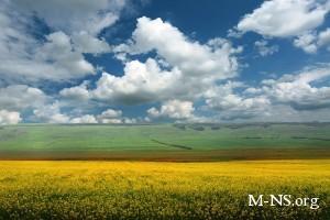 Государство будет предоставлять аграриям средства на осенне-полевые работы по низким кредитным ставкам