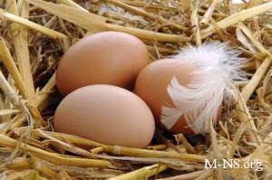 Птицеводы пошли против АМКУ и отказались снижать цены на яйца