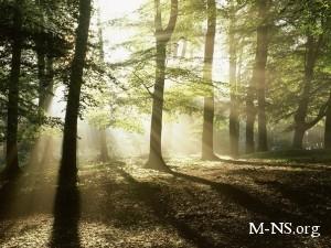 В Украине будут брать деньги за поход в лес