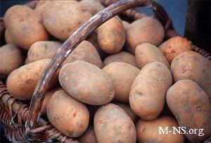 Морозы могут взвинтить цены на картофель