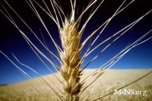 Присяжнюк: Ограничений на экспорт зерна не будет