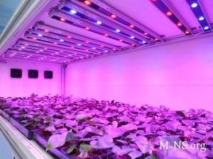 Повысить урожайность и доход своего предприятия — с фитолампами это реально